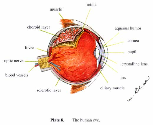 Image result for blood vessels in the eyes Allah